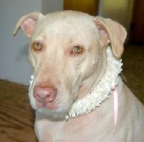 Kiwi wearing a Stephanotis Lei ready for her Hospital Long Term Care Visit 5-22-09